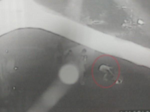 被害女子被載到新竹縣山區拖下車圍毆,還強剪她的長髮,潑水電擊她,甚至強行扒衣換上情趣女僕裝,還拍照錄影PO網;警方表示,全案依傷害及妨礙自由等罪嫌移請新竹地檢署偵辦中。  (記者廖雪茹翻攝)