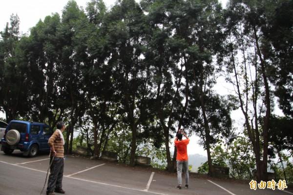 登山客搶拍從停車格竄上一旁路樹的台灣獼猴。(記者黃美珠攝)
