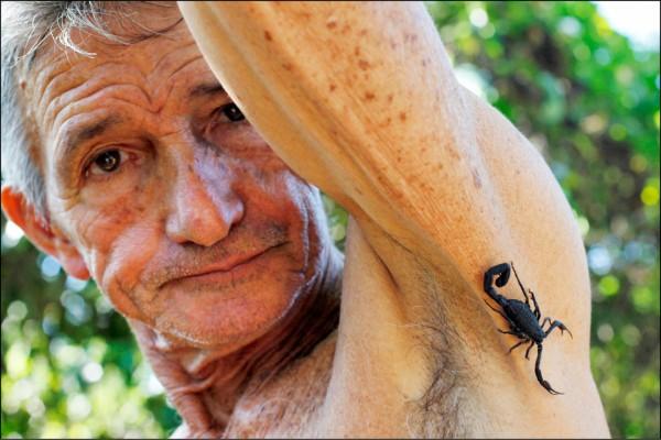 古巴農夫佩佩‧卡薩納斯10年來身體力行他自創的古巴藍蠍止痛法。(路透)