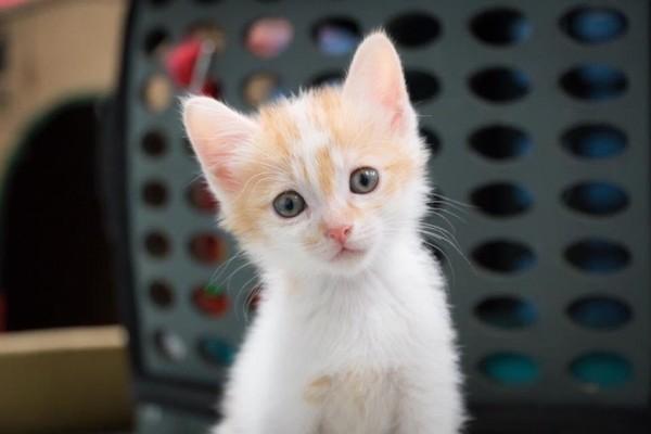新北市政府動物保護防疫處推出「飼養寵物認證卡」,鼓勵民眾先上生命教育課程再養寵物,宣導「認養不棄養,給牠一個溫暖的家」。(新北動保處提供)