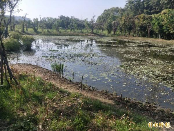 南科管理局以霞客湖為水源,營造適合螢火蟲生長的環境。(記者萬于甄攝)
