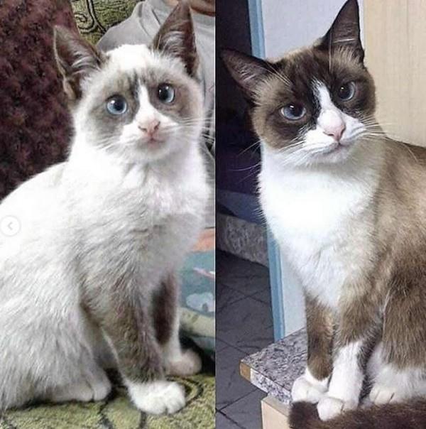 貓咪在10個裡就有著明顯的增長。(圖擷自IG)