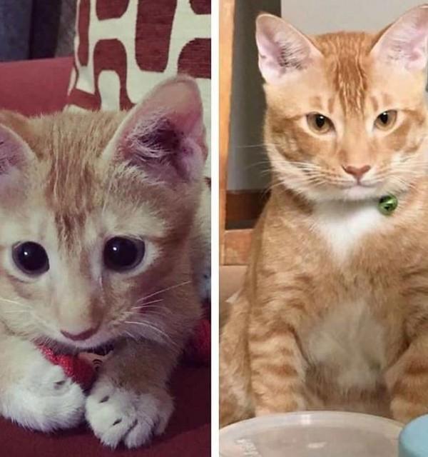貓咪從出生成長到10個月,相當於人類從嬰兒成長成13歲的青少年。(圖擷自IG)