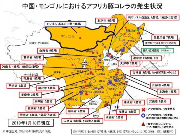 中國非洲豬瘟疫情傳播至外蒙古,秋海棠葉的模樣正在成形。(圖擷取自日本農林水產省)