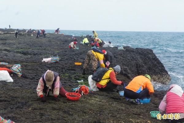 列入澎湖三金的姑婆嶼採紫菜,近250位民眾登島採收黑金。(記者劉禹慶攝)