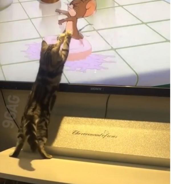 外國一隻貓咪對著電視《湯姆貓與傑利鼠》中的傑利鼠不斷揮爪。(圖擷自IG)