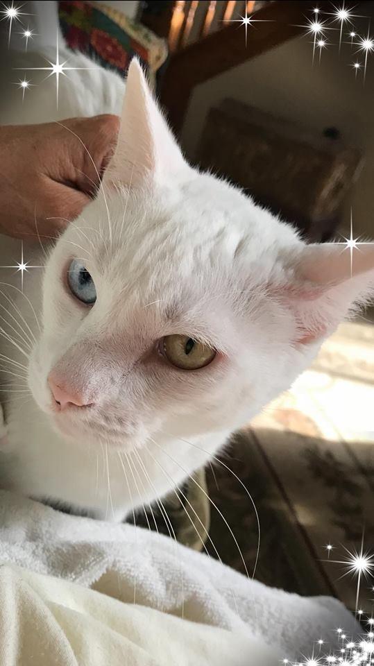 貓咪在痊癒後張開眼睛,展現出兩顆不同顏色的眼球。(圖擷自臉書)