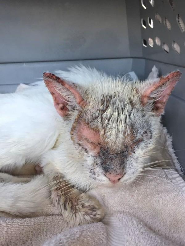 美國動保組織發現了一隻臉上都是疥癬、眼睛睜不開的流浪貓。(圖擷自BoredPanda)