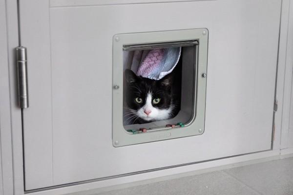有些飼主常因為要外出,將貓咪獨自留在家中。(歐新社)
