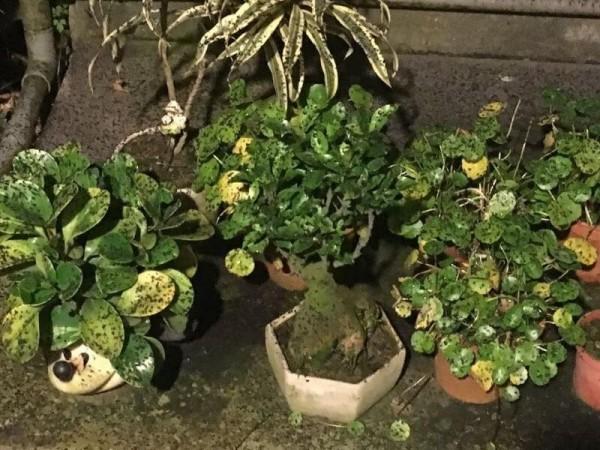 盆栽也蓋滿黑色粉塵。(擷取自臉書「林口大家庭」)