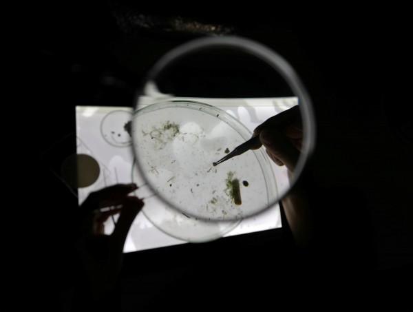 英國1項最新研究指出,在每隻海洋哺乳類的腸胃道中,平均可發現5.5個塑膠微粒,海洋儼然是個「塑膠微粒湯」。圖為塑膠微粒研究示意圖,非本次研究。(路透)