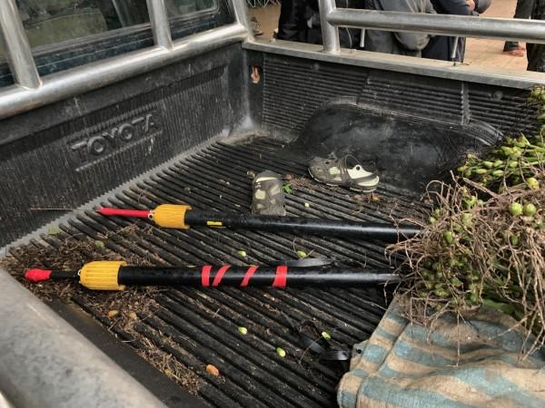 警方在現場起出被偷割的檳榔,及2組犯案檳榔刀。(鳳林分局提供)