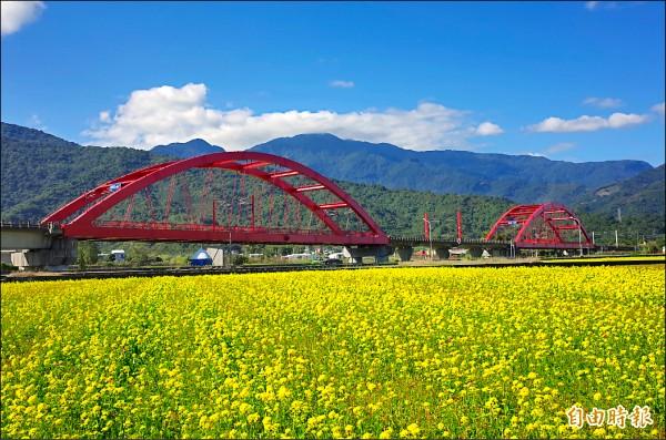 縱谷二期稻作年底收割後,就種起大片的油菜花,春節是最佳賞花期。(記者花孟璟攝)