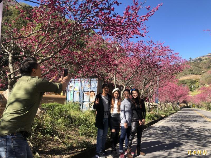 來自泰國的遊客趕緊與櫻花合影留念,直呼來對時間與地點。(記者佟振國攝)