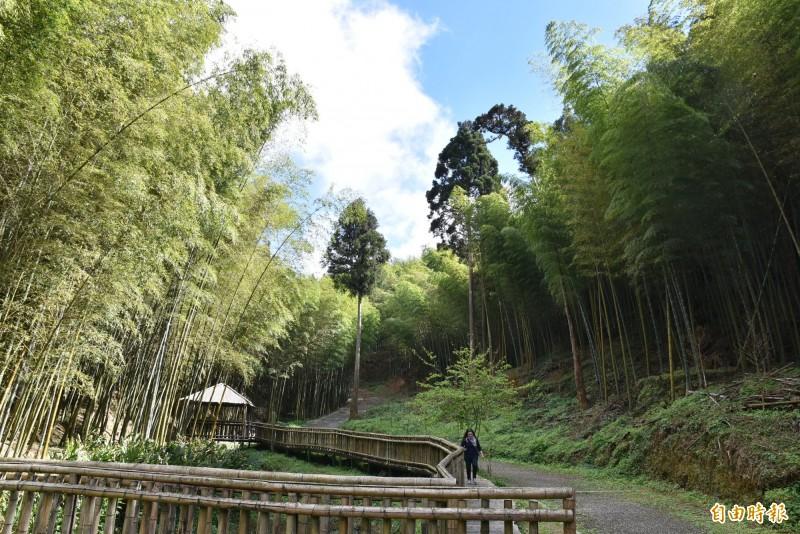 雲林草嶺的竹林秘境不輸電影「臥虎藏龍」的場景。(記者黃淑莉攝)