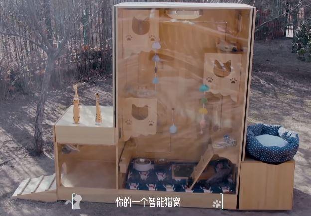 中國一名工程師與動物義工合作,推出一個搭載人工智慧的AI貓咪避難所。(圖擷自YouTube)