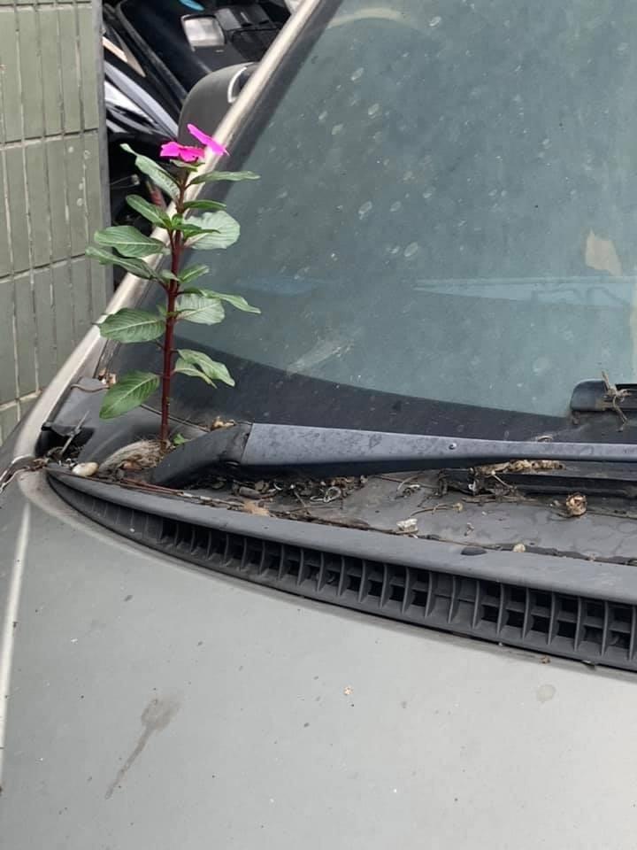 原PO住處樓下有人長期霸占車位,停到車子都開花了。(圖擷取自臉書社團「爆料公社」)