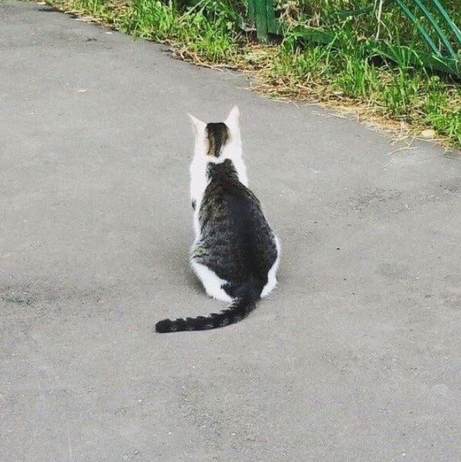 有網友意外找到花色特殊的貓咪,看起來就像是「貓中有貓」,讓其他網友忍不住直呼「是奇蹟」。(圖擷取自「ひなゎら」推特)