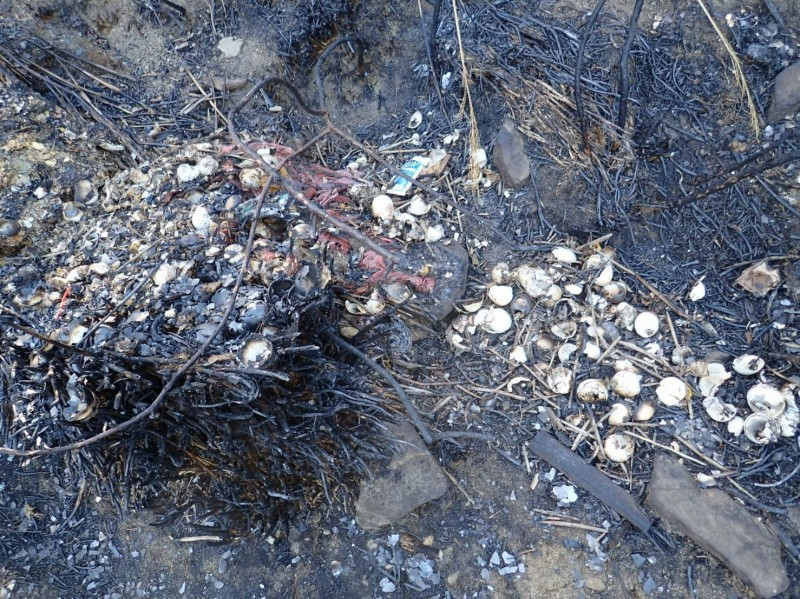 雪霸國家公園「三六九山莊」旁山林,於3日發生火災,約3公頃的林木被燒毀,而原本被丟棄、隱藏在林間的垃圾也畢露無遺,有茶桶、臉盆、玻璃瓶、蛋殼、睡袋、鍋具等,散布在槁木死灰中,醜陋不堪。(圖由雪霸處提供)