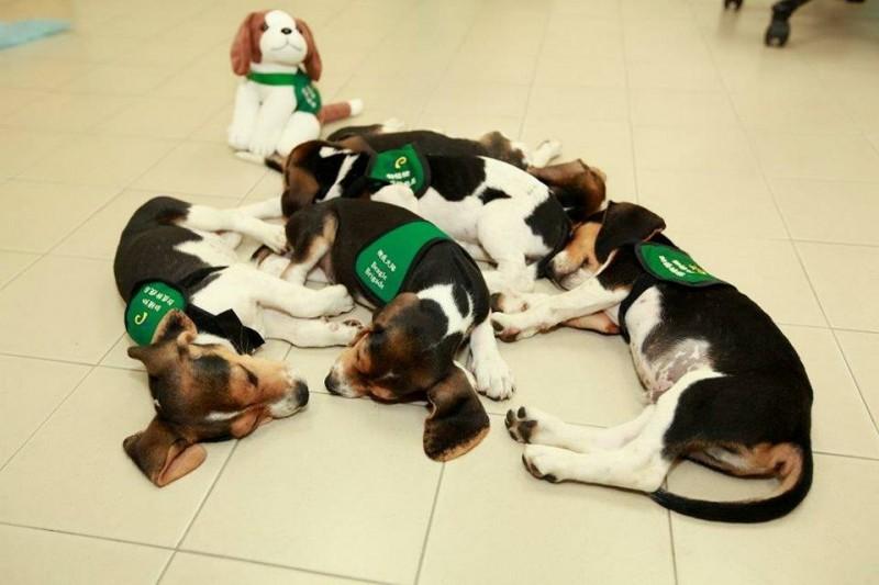 見到這些辛勞的神犬們,別忘了對他們行注目禮,感謝他們對台灣的貢獻。(圖擷取自動植物防疫檢疫局臉書專頁)