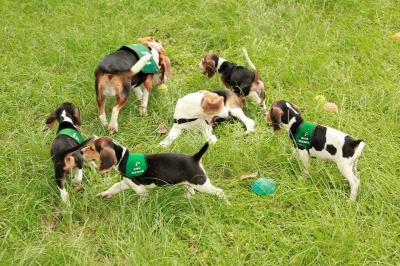 防檢局植物檢疫組組長陳子偉表示,檢疫犬們其實並沒有享有「貴族狗」的待遇。(圖擷取自動植物防疫檢疫局臉書專頁)