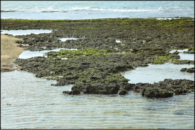 從麟山鼻至淺水灣一帶的海岸有經過特殊海藻生長建構而成的「藻礁」,騎車行經海岸線不妨停下觀察有沒有寄居蟹、小螃蟹在其中棲息,但切記請勿捉捕與打擾當地生態。(記者沈昱嘉/攝影)