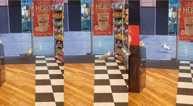 國外1隻海鷗犯下竊盜罪,但店家沒有對此報警。(圖擷取自爆笑公社)