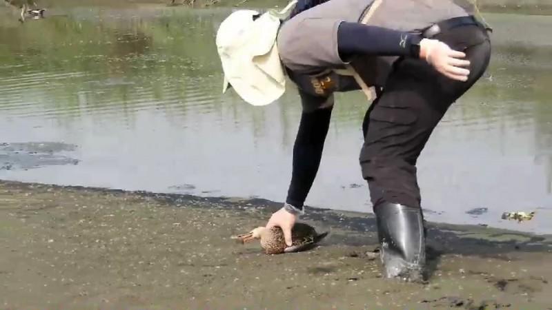志工於沙洲撿拾鳥屍。(記者黃旭磊翻攝)