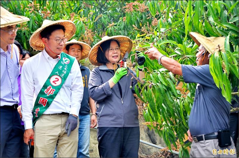 民進黨立委候選人郭國文昨陪同蔡總統視察台南山區產業,為開花期的愛文芒果剪枝,體驗農忙。(記者吳俊鋒攝)