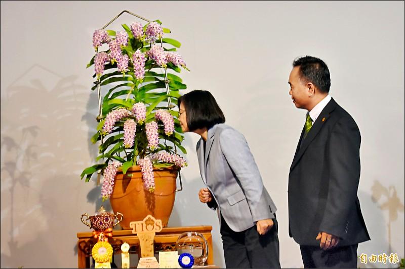 總統蔡英文參觀冠軍蘭花狐狸尾蘭時,特別靠近聞花香大讚好香。(記者楊金城攝)