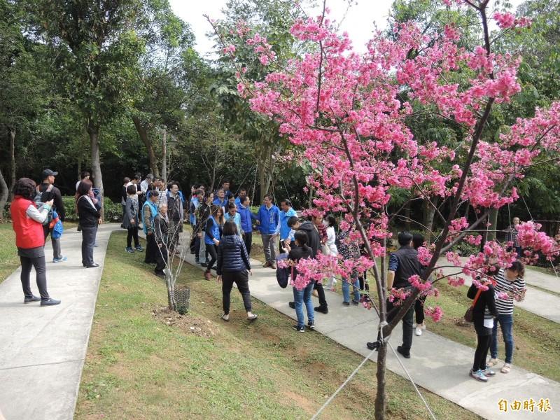 永吉公園的櫻花盛開,吸引不少外地遊客前來賞玩。(記者翁聿煌攝)