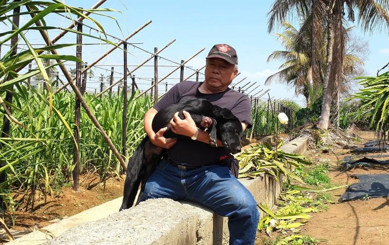 南投竹山傳出有流浪狗遭獸鋏夾斷腳掌,位在高雄的台灣動物緊急救援小組獲悉,北上救援。(台灣動物緊急救援小組提供)