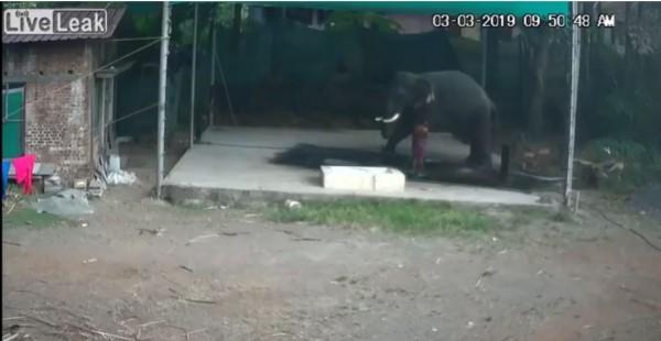 1名任職於動物園的管理員,在指揮大象跪下時不慎腳滑,當場遭大象壓死。(圖擷取自liveleak)