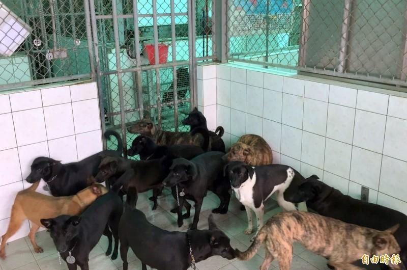 南投縣公立動物收容所因新建工程,5月31曰以前暫停新進犬貓收容服務。(記者謝介裕攝)