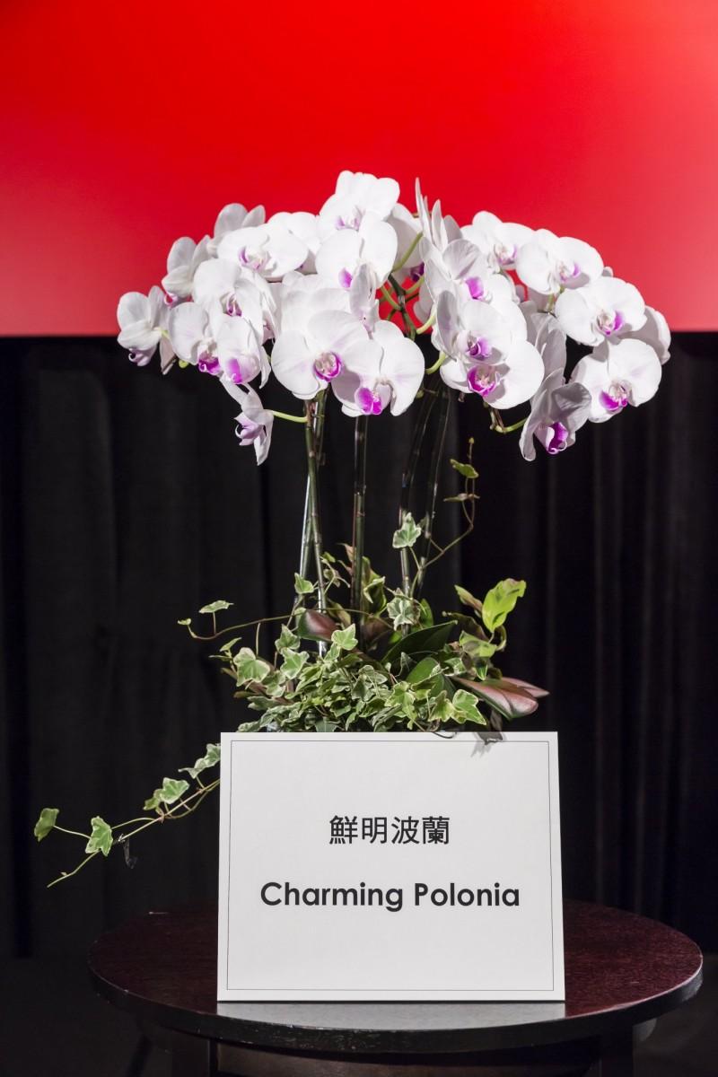 波蘭台北辦事處梅西亞處長命名的「鮮明波蘭」蘭花。(台南市政府提供)
