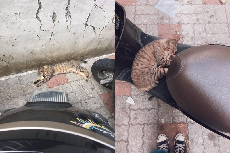沒想到網友牽車時,竟發現貓咪得寸進尺地跑到車上,窩成一團睡得香甜。(圖擷取自Dcard)
