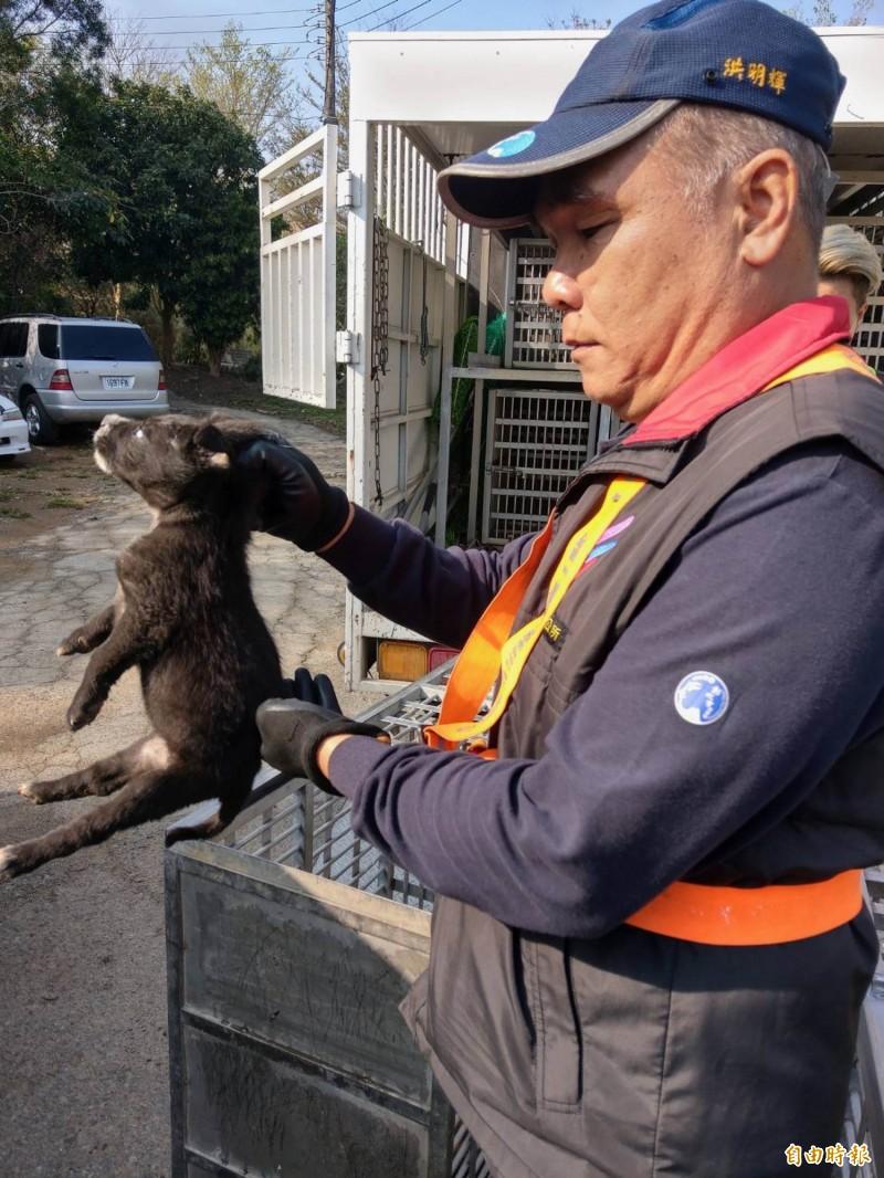 彰化市公所清潔隊今天出動捕捉流浪狗,幼犬跑不快,被隊員手到擒來。(記者湯世名攝)