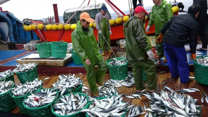 中國漁船6000公斤漁獲,全數強制進行海拋。(澎湖海巡隊提供)