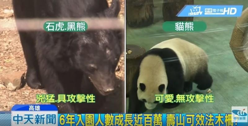 中天新聞將貓熊與石虎、台灣黑熊做比較,稱石虎與台灣黑熊外型兇猛又具攻擊性,遭專家打臉。(記者鄭名翔翻攝)