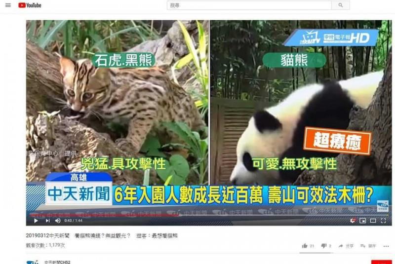 中天新聞昨(12)日報導,貓熊可愛、無攻擊性,引起民眾討論。(圖取自YouTube)