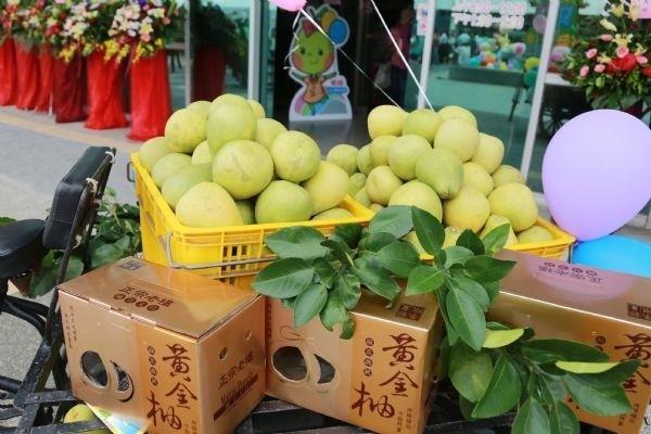 麻豆文旦有獨特甘甜口感,卻被政治選舉議題炒作。圖為「2018麻豆文旦產業文化活動」場景。(擷自台南市政府官網)