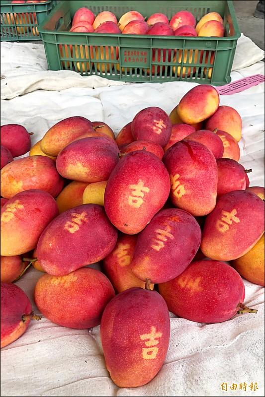 「吉」芒果在拍賣市場連續兩週拍下每台斤350元高價。(記者邱芷柔攝)
