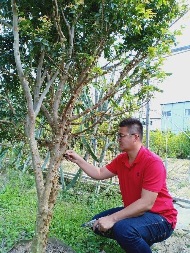 三十九歲、出身台灣嘉義農業世家的蔡志陽,最近獲聘擔任「漳浦縣台籍科技特派員」。(取自網路)