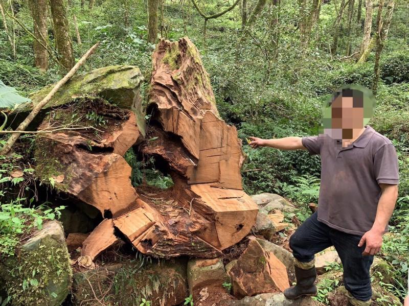 警突襲「部落西藥房」毒窟 起出逾6噸盜伐林木