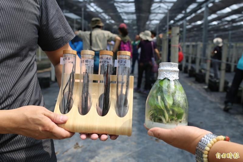 天然香草價格飆漲 農友組合作社「發大財」