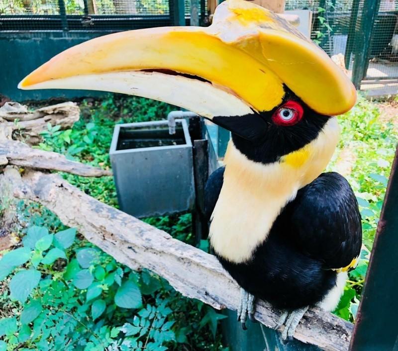 先不說貓熊了 壽山動物園明天請出大犀鳥代言
