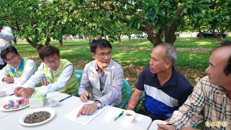 幫助麻豆文旦維持高身價 農委會將收購100萬台斤次級品