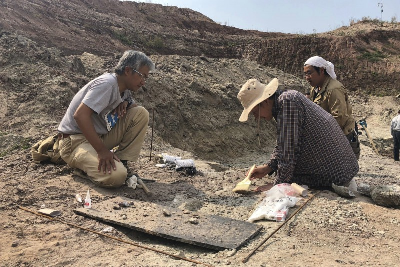 中國近日發現藏有大量未知化石的新遺址。圖為示意圖。(美聯社)