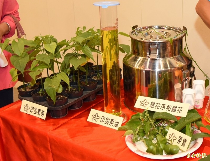 秘魯印加果經濟效益高,葉子可泡茶、果實可製成果醬及榨油。(記者張協昇攝)