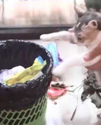 外國一位貓主人讓貓咪將自己製造的垃圾清理乾淨。(圖擷自IG)